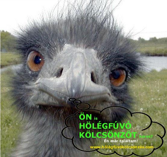 www.holegfuvokolcsonzes.hu  Pb gázos hőlégfúvó 900,- Ft/nap